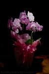 1stAnn_Flower.jpg