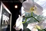 胡蝶蘭咲きました♪♪♪